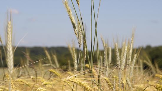 L'agriculture bio en Bourgiogne-Franche-Comté - ©DavidCesbron