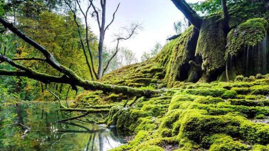 Parc national de forêts - Crédidit photo Franck Fouquet
