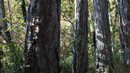 Forêt du Val Suzon (21) - Crédit photo Région Bourgogne-Franche-Comté / David Cesbron