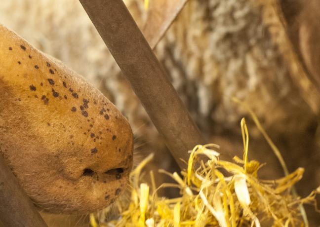 Salon international de l'agriculture - Crédit Région Bourgogne-Franche-Comté / David Cesbron