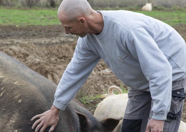 Baptiste Bernard et Emilie Jarrot font naître et élèvent des cochons à Chargey-lès-Gray (70) - Crédit photo Région Bourgogne-Franche-Comté / David Cesbron